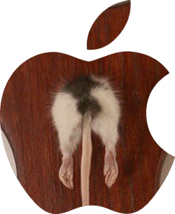Apple Rat