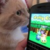 Have some fun, colorful gaming with Jelly Cats