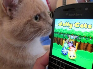 Fun gaming with Jelly Cats
