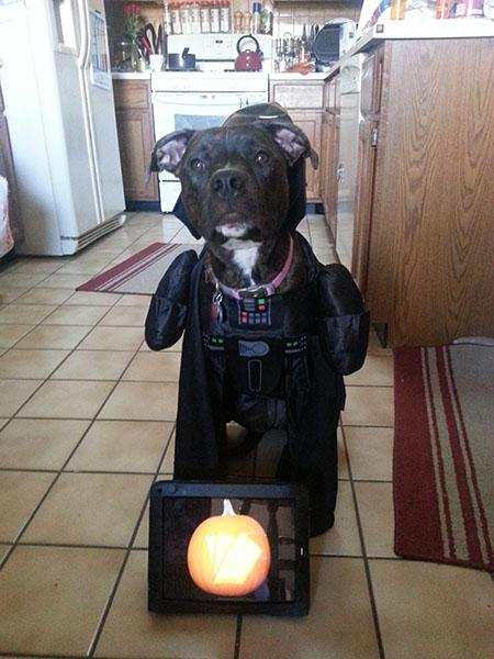 Best Pet costume